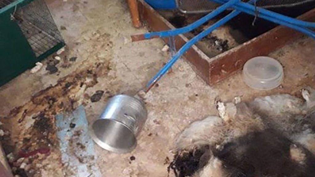 El chalet de los horrores en Sevilla: Hallan 12 perros muertos en un desahucio