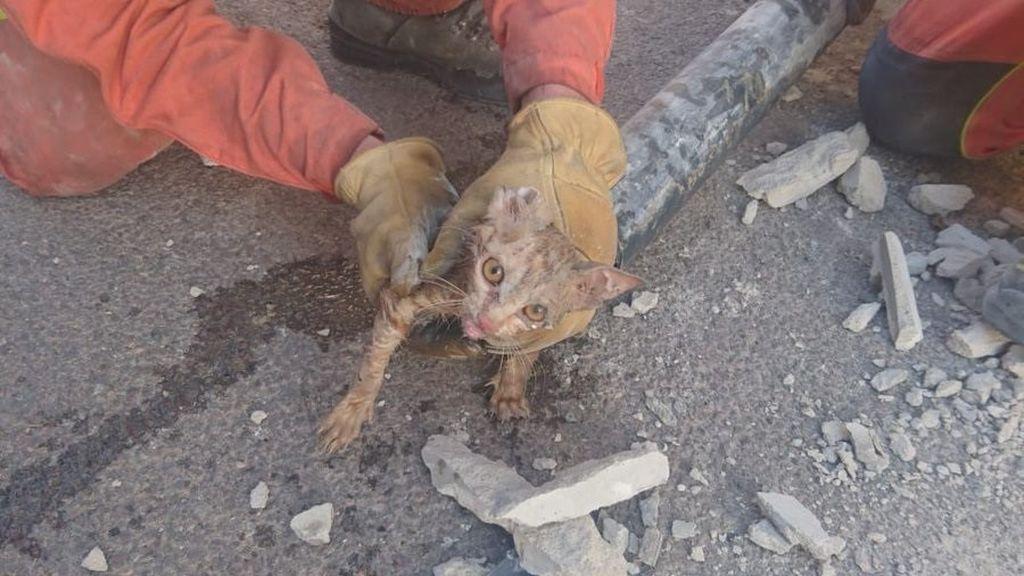 Rescatan a un gato en Valencia tras quedar atrapado en un tubería