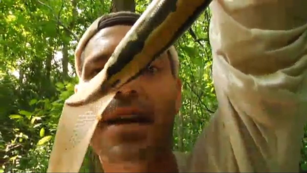 Frank reta a una serpiente y al final le muerde