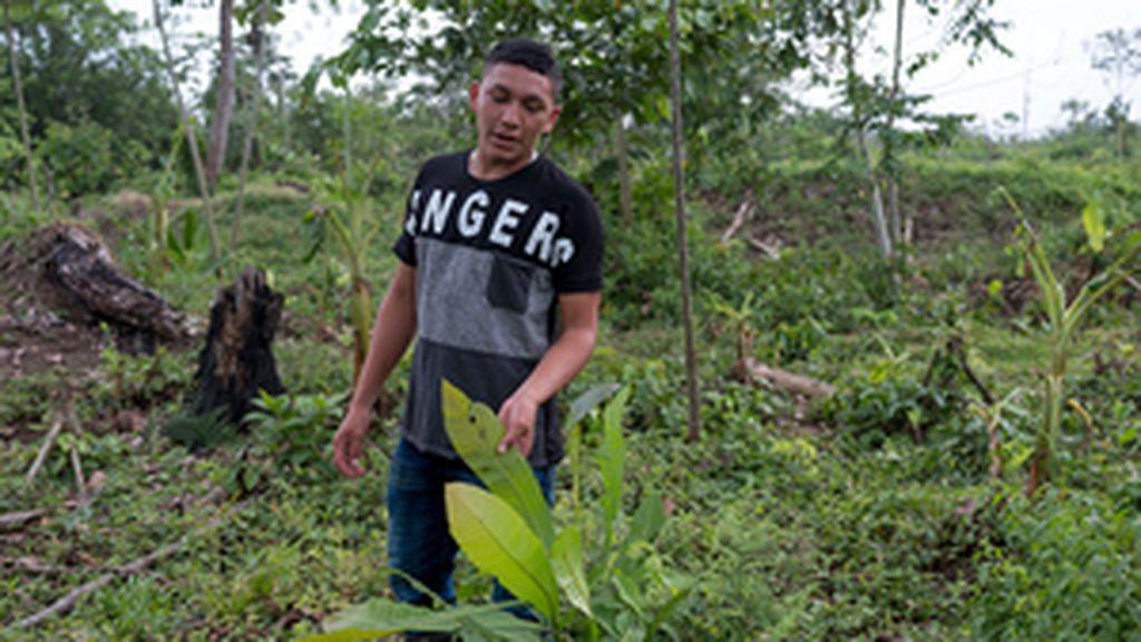 Al menos 207 ambientalistas fueron asesinados en 2017, el peor año desde que se tienen registros, según Global Witness