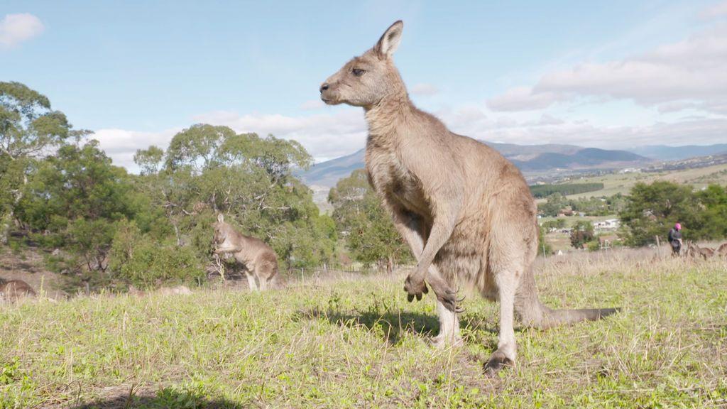 'Viajeros Cuatro' en Melbourne y Tasmania.