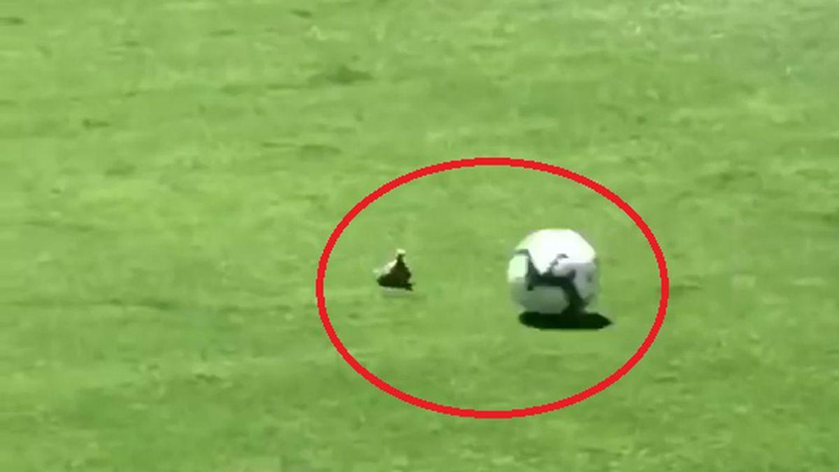 ¡Horror! Mata accidentalmente a un pájaro en pleno partido