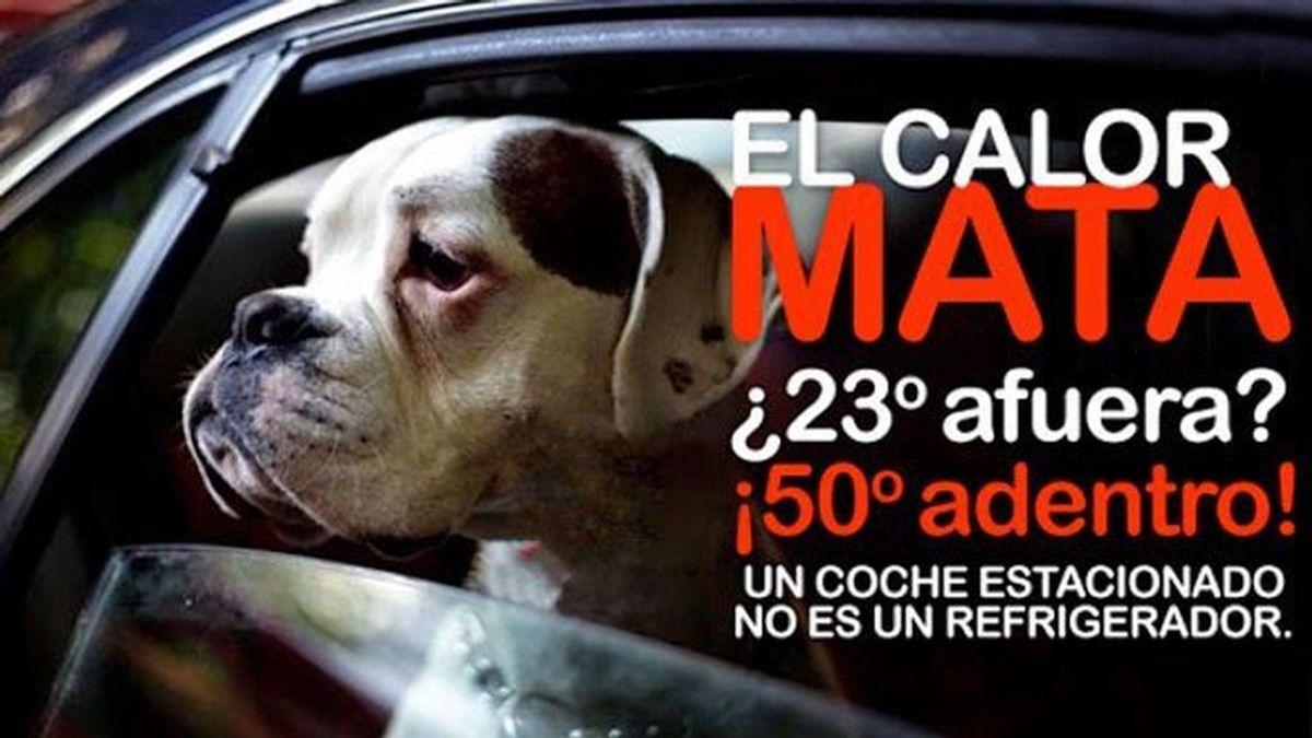 Hallan 4 perros muertos tras dejarles solos dentro del coche en el parking de una discoteca