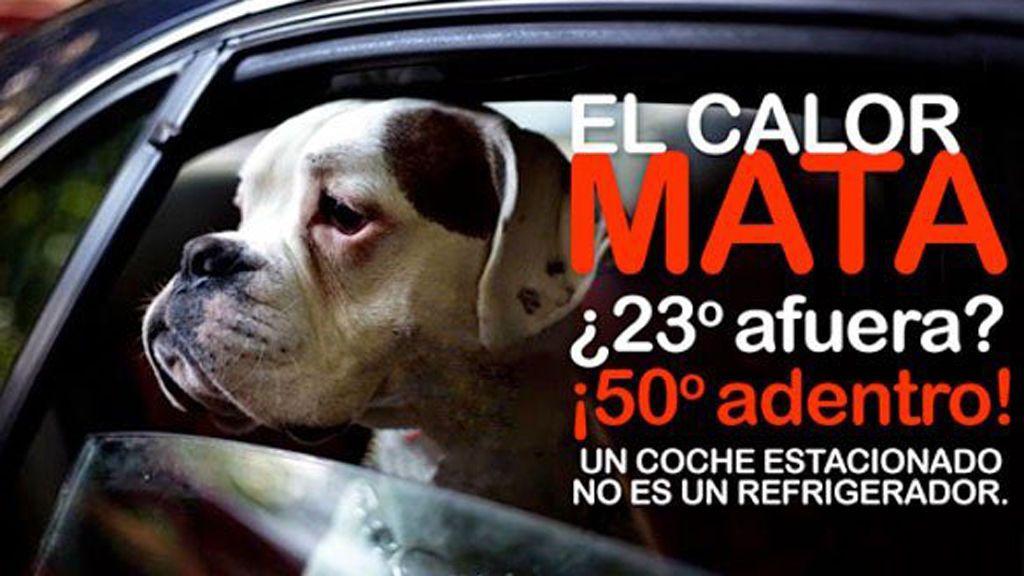 Encuentran a cuatro perros muertos dentro de un coche después de que sus dueños les dejasen solos
