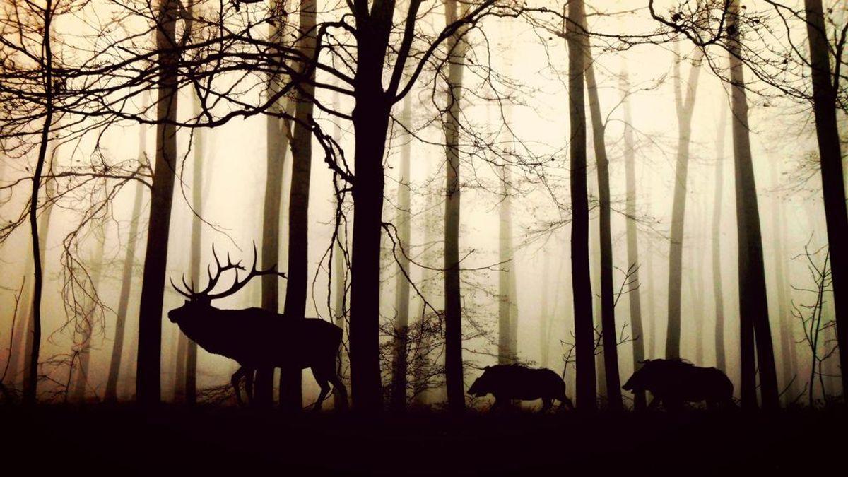 Los expertos advierten: el colapso global de la biodiversidad es inminente (sin una acción urgente)