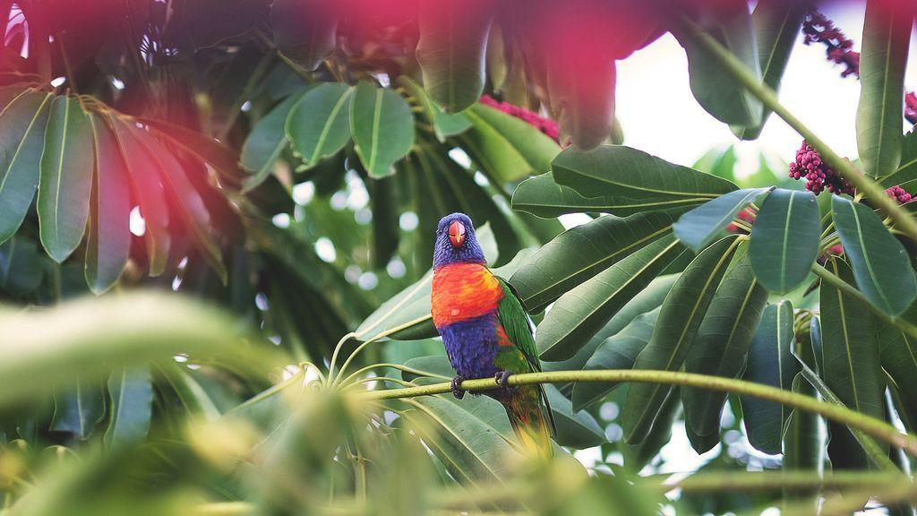 parrot-1246688_1920