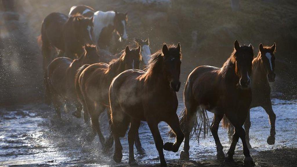 Día del caballo en el sur de Australia