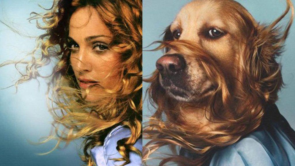 El nuevo rey del Pop: este perro recrea los looks más famosos de Madonna