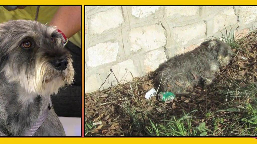 Víctor Sandoval presenta a Té, un perrito abandonado, atropellado, que busca un nuevo hogar