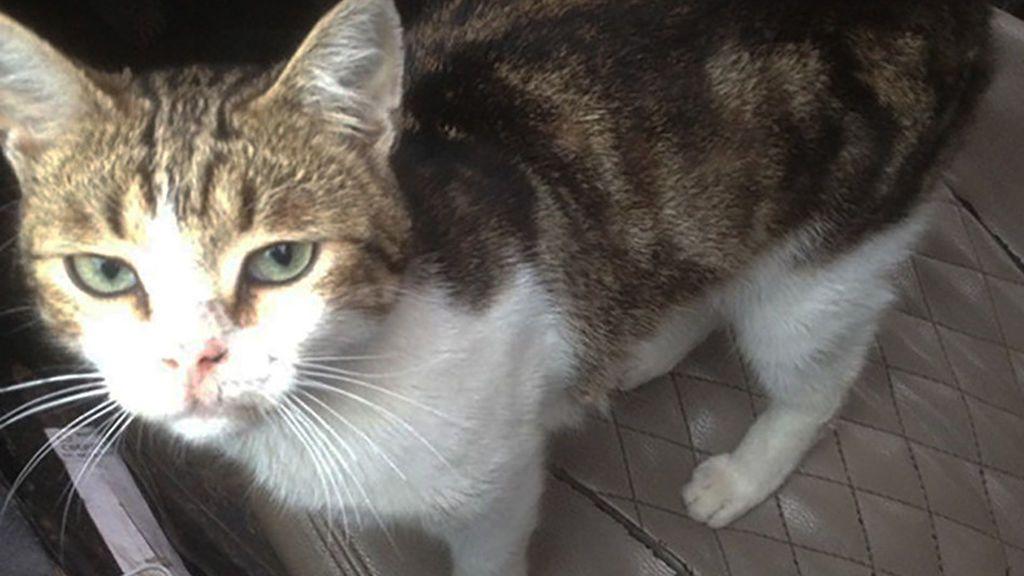Un gato se convierte en el nuevo 'narco' de una cárcel de Rusia