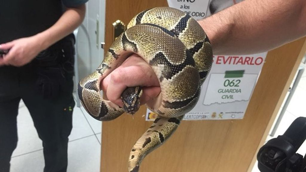 Una mujer encuentra una serpiente pitón en el baño de su casa en Ciempozuelos