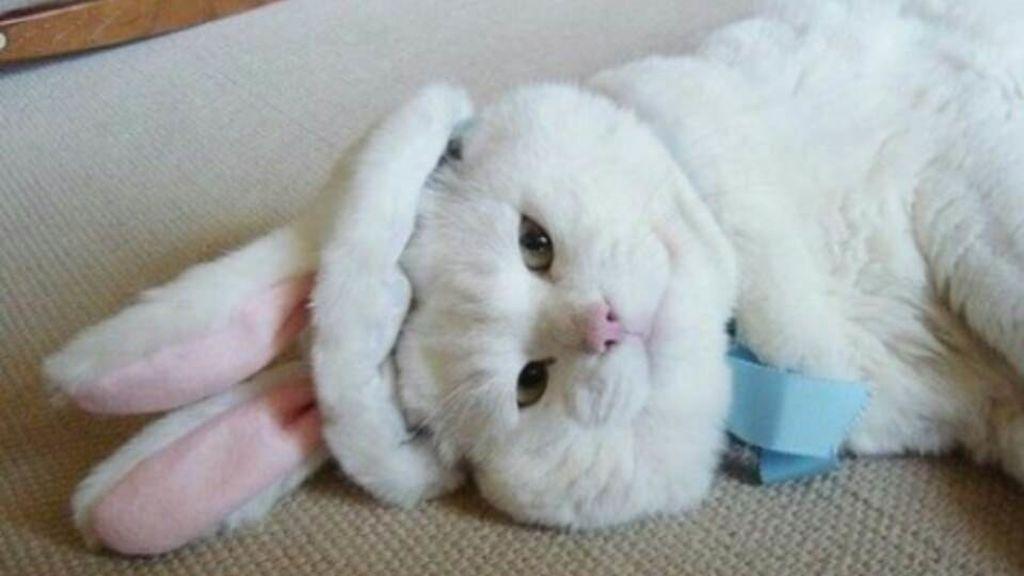 Un conejo desafía tu destreza visual: ¿Eres capaz de verlo entre tanto conejo?