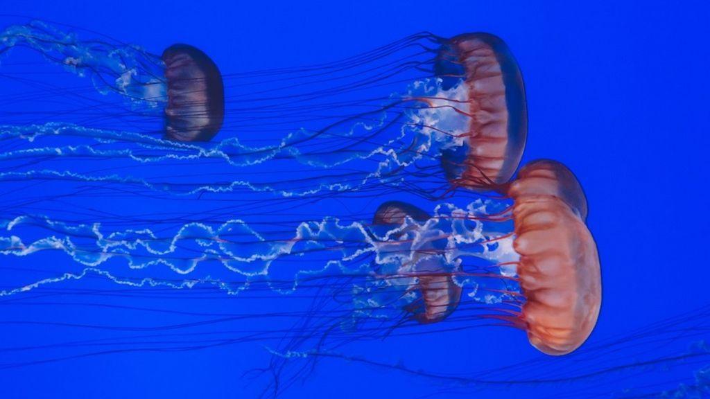 Recuerda: estas son las cinco cosas que no debes hacer si te pica una medusa