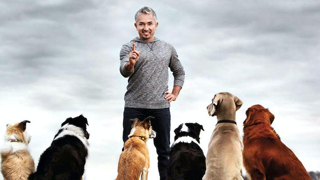 Los perros pueden sufrir las mismas alergias que sus dueños