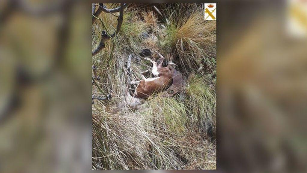 Detenido en Tenerife por matar a un perro con una azada