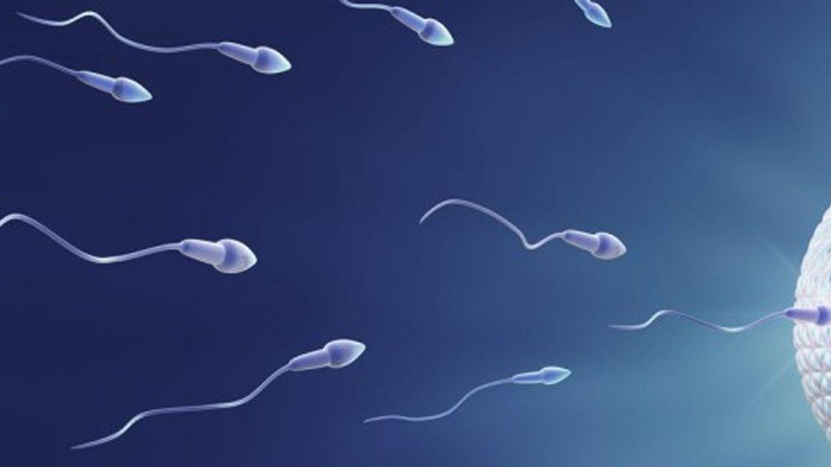El espermatozoide
