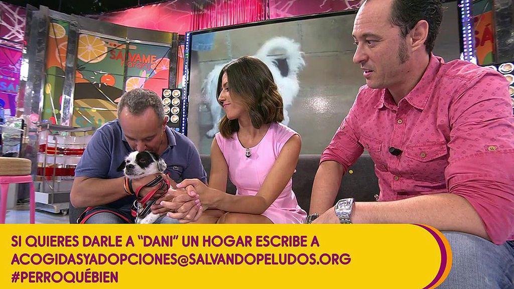 Víctor Sandoval hace un llamamiento en contra del abandono de mascotas