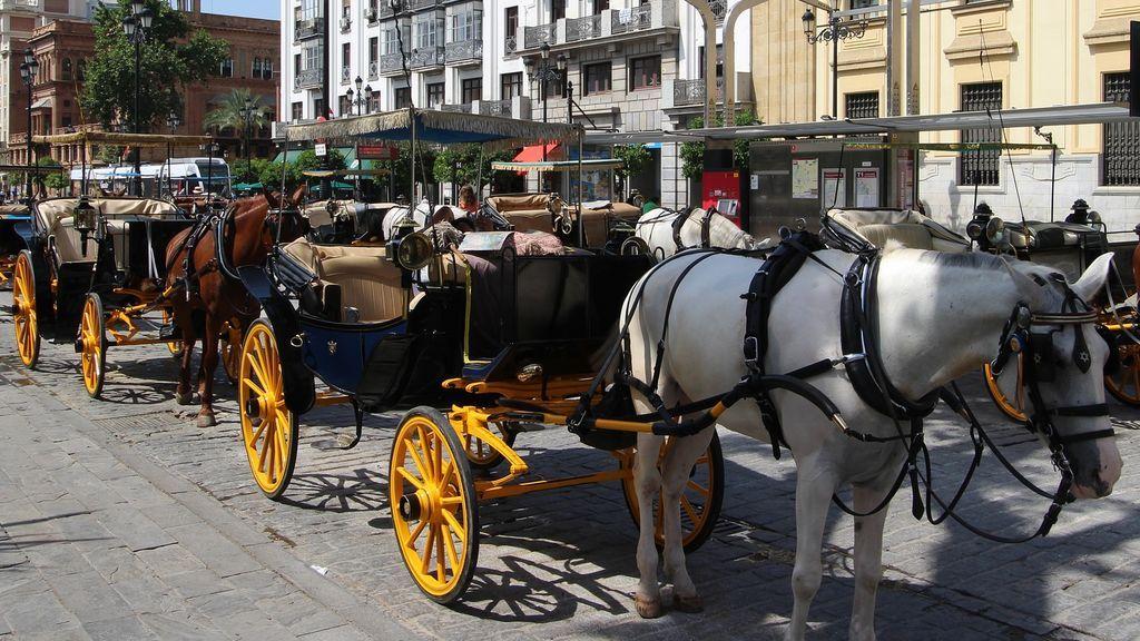 El conductor de un coche de caballos de Sevilla, denunciado por triplicar la tasa de alcohol