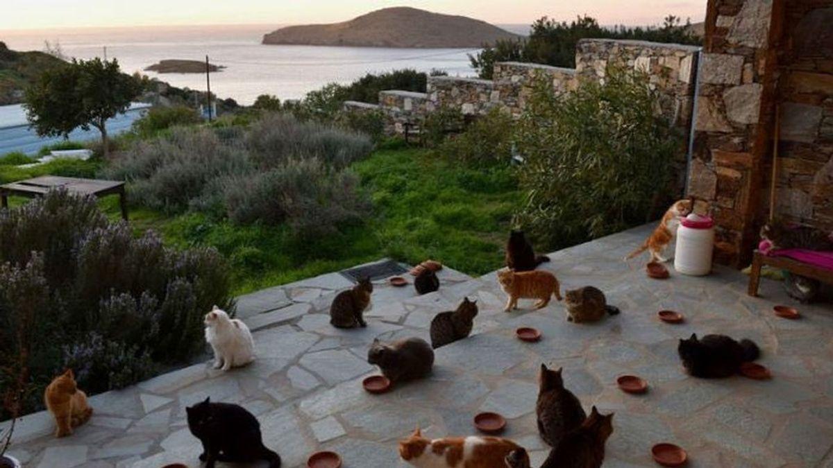 Si te encantan los gatos, este es tu trabajo: cuidarlos en su casa en Grecia