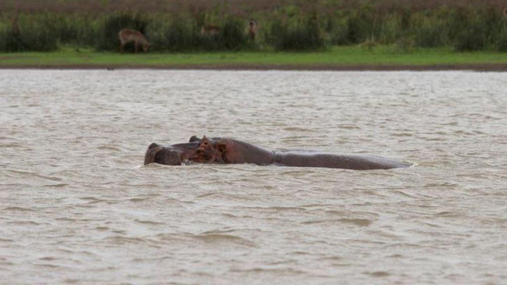 Kenia hipopotamo