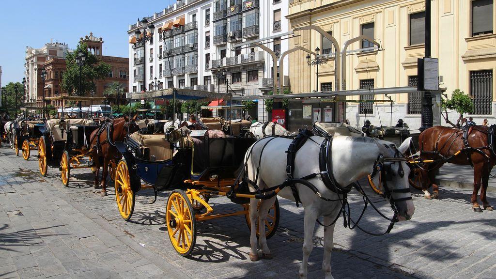 Denuncian al conductor de un coche de caballos de Sevilla por triplicar la tasa de alcohol