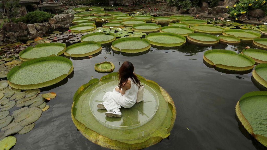 Paraíso vegetal en Taiwán