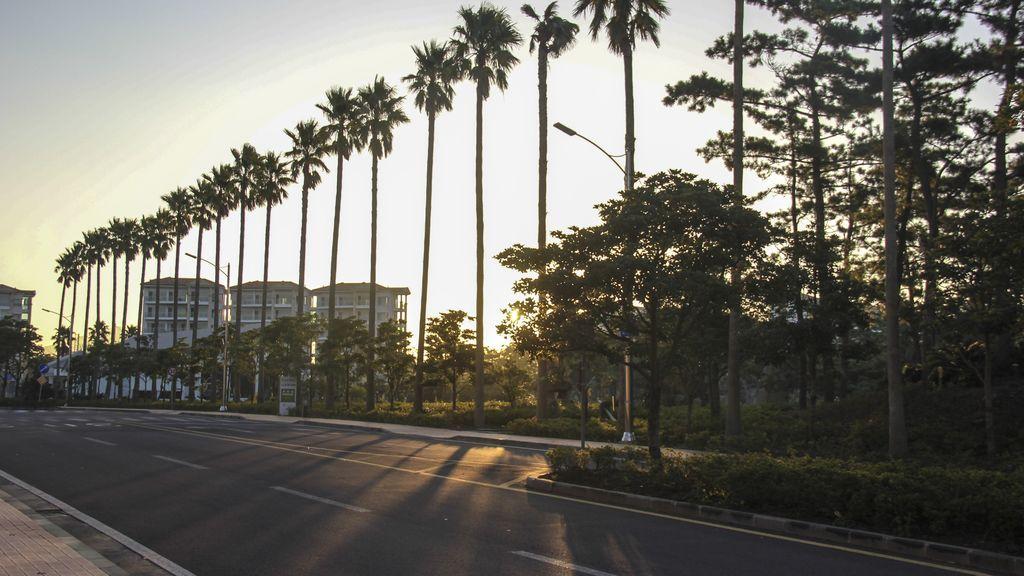 tree-sunshine-road-morning-city-cityscape-1073757-pxhere.com