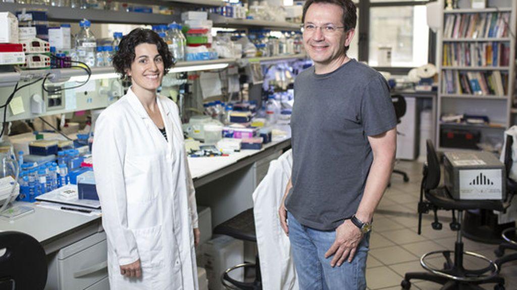 Descubierta una proteína clave en el desarrollo del autismo