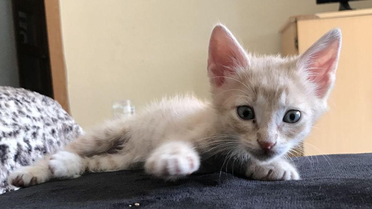 ¿Hasta que punto puede cambiarte la vida una mascota?