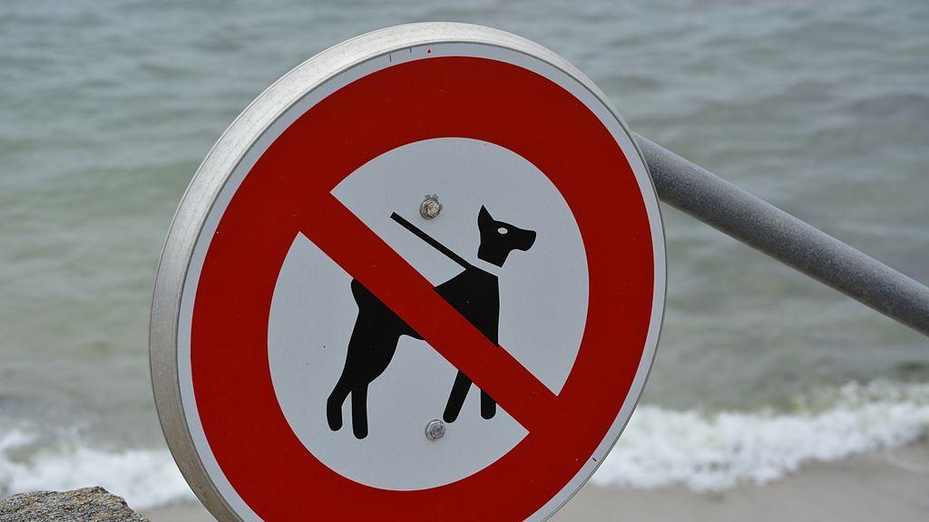 perros playa