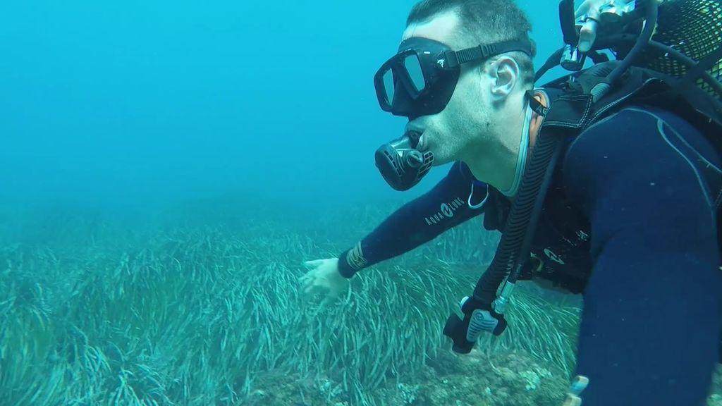 """La belleza del fondo marino de la Costa Cálida: """"¡Qué pasada, es espectacular!"""""""