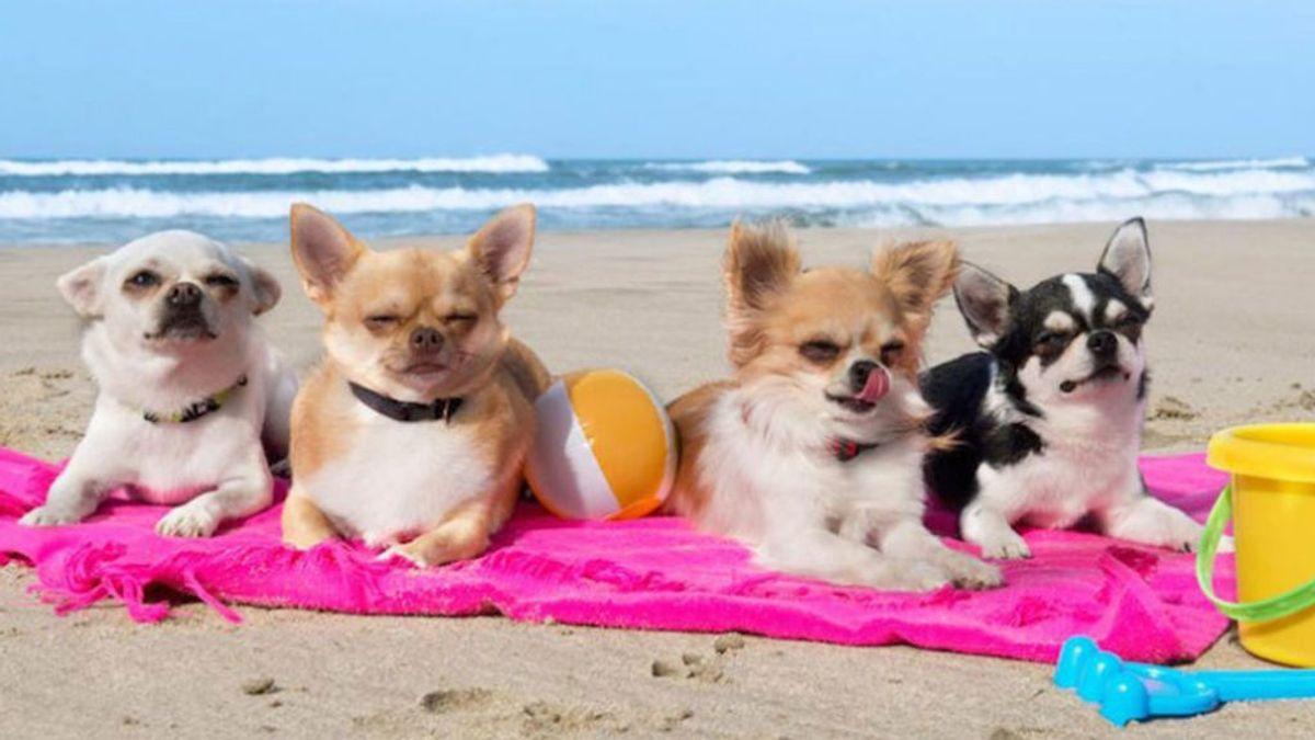 Los perros ganan derechos en las playas y lugares públicos