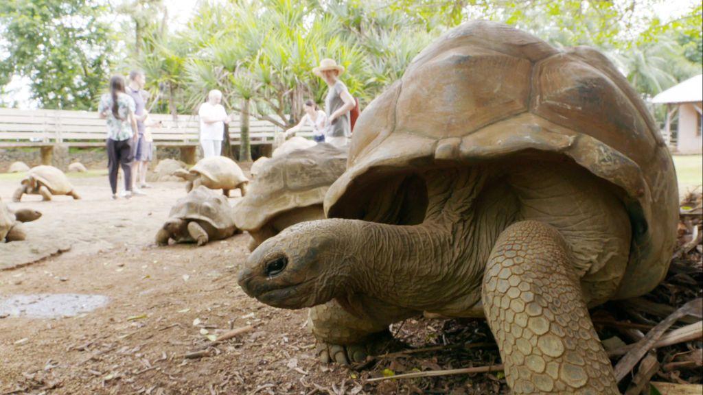 Isla Mauricio, el miércoles 22 de agosto en 'Viajeros Cuatro'.