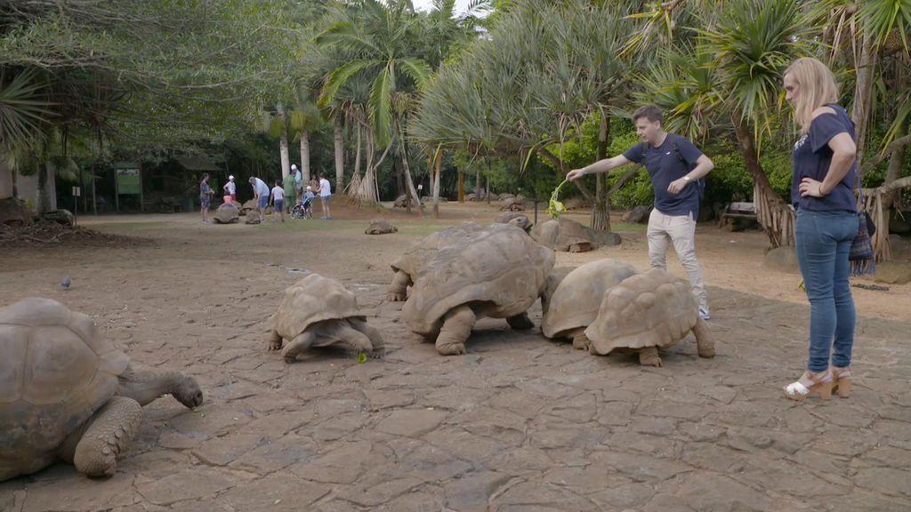 Tortugas gigantes y playas paradisíacas: Qué ver en Mauricio