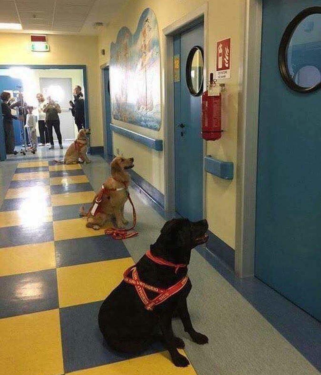 perros hospital