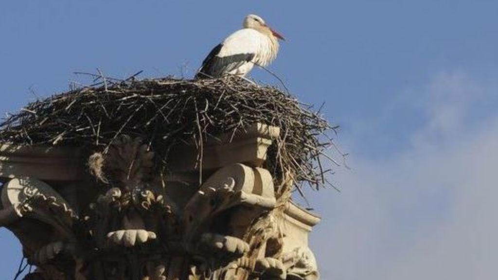 Denuncian 36 casos de destrucción de nidos de especies protegidas en los últimos siete años