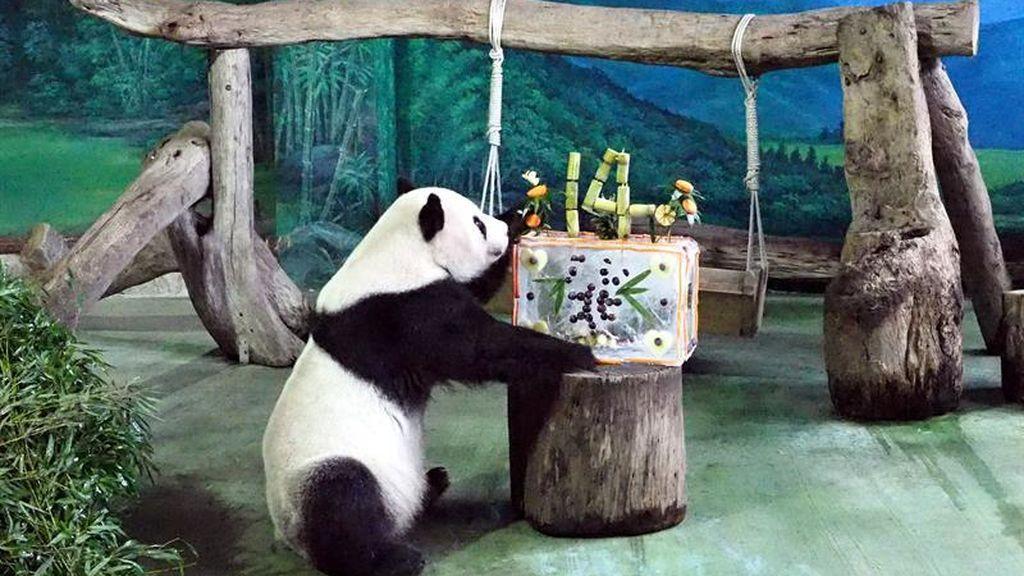 Cumpleaños en el zoo de Taiwán