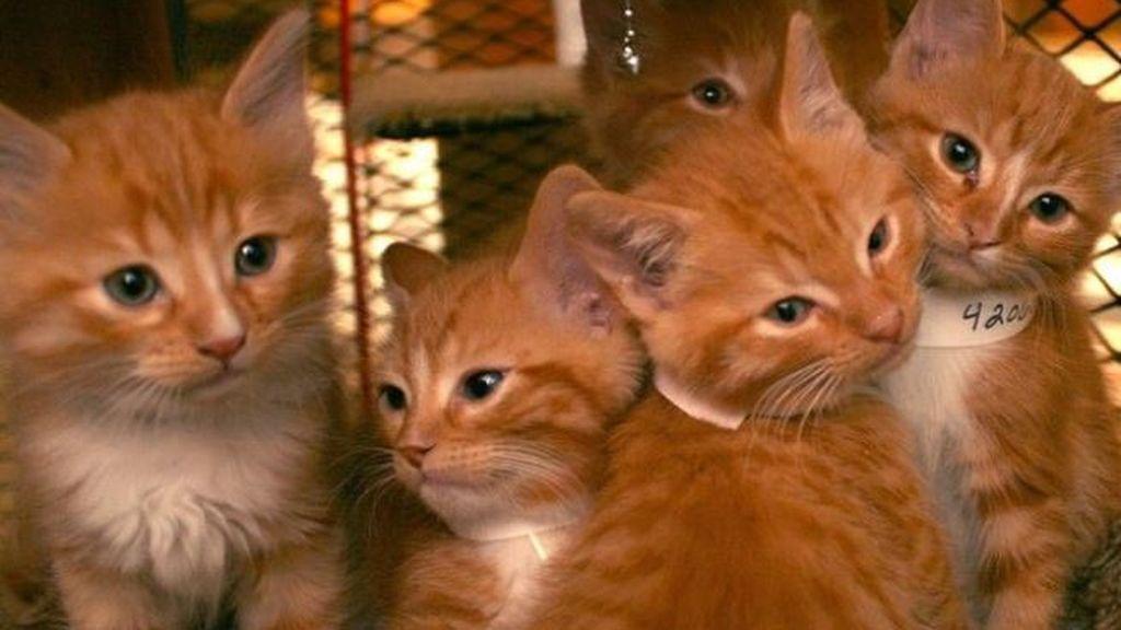 Los trabajadores de un ayuntamiento 'alquilan' gatos para acariciarlos en su jornada laboral