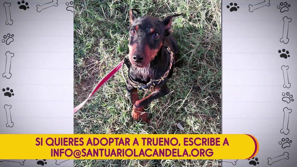 Buscamos una familia para Trueno, un perro al que encontraron con los huesos rotos