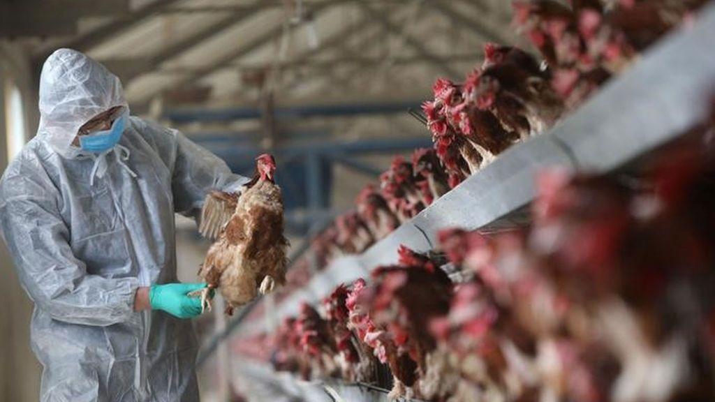Identifican un nuevo virus de la influenza transmitido por aves a humanos