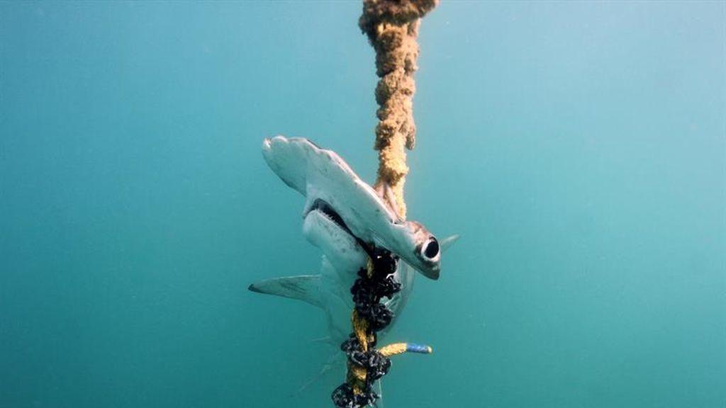 Australia alerta del peligro de los palangres en el mar