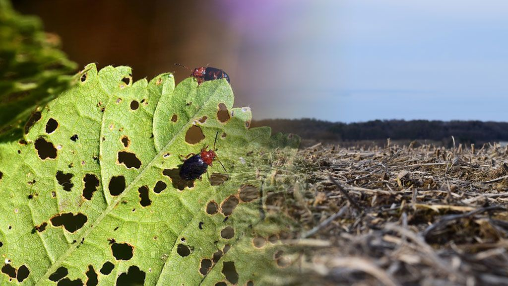 Una plaga de insectos hambrientos afectará a cultivos de todo el mundo: claves para entender que nos espera