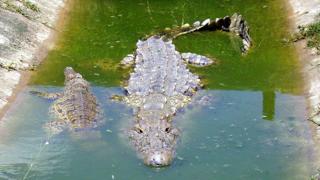 Un cocodrilo se come a una mujer de 40 años y a su bebé de cinco meses en Uganda