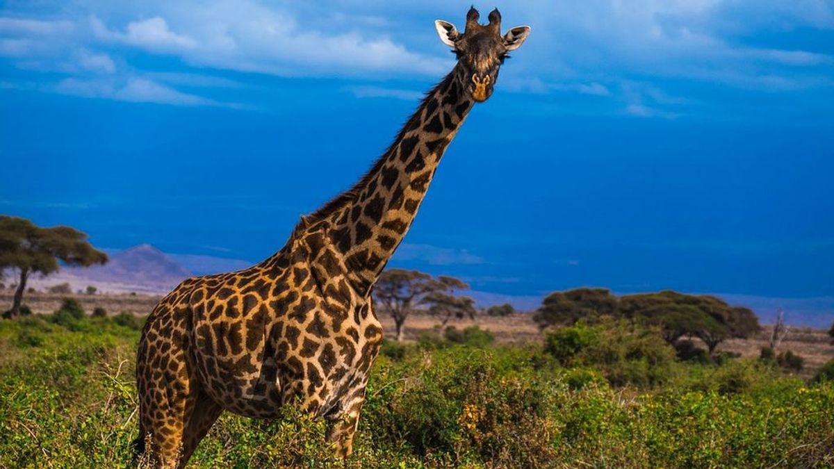 Una mujer y su hijo de tres años, en estado crítico tras ser atacadas por una jirafa