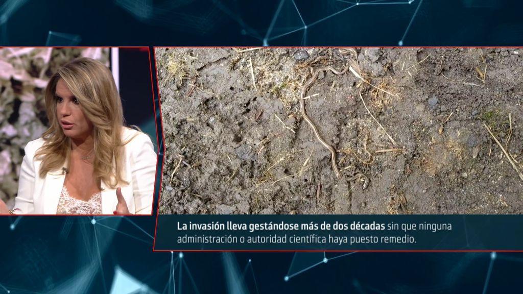 Cuarto Milenio | Silenciosa plaga letal: La invasión de unos gusanos ...