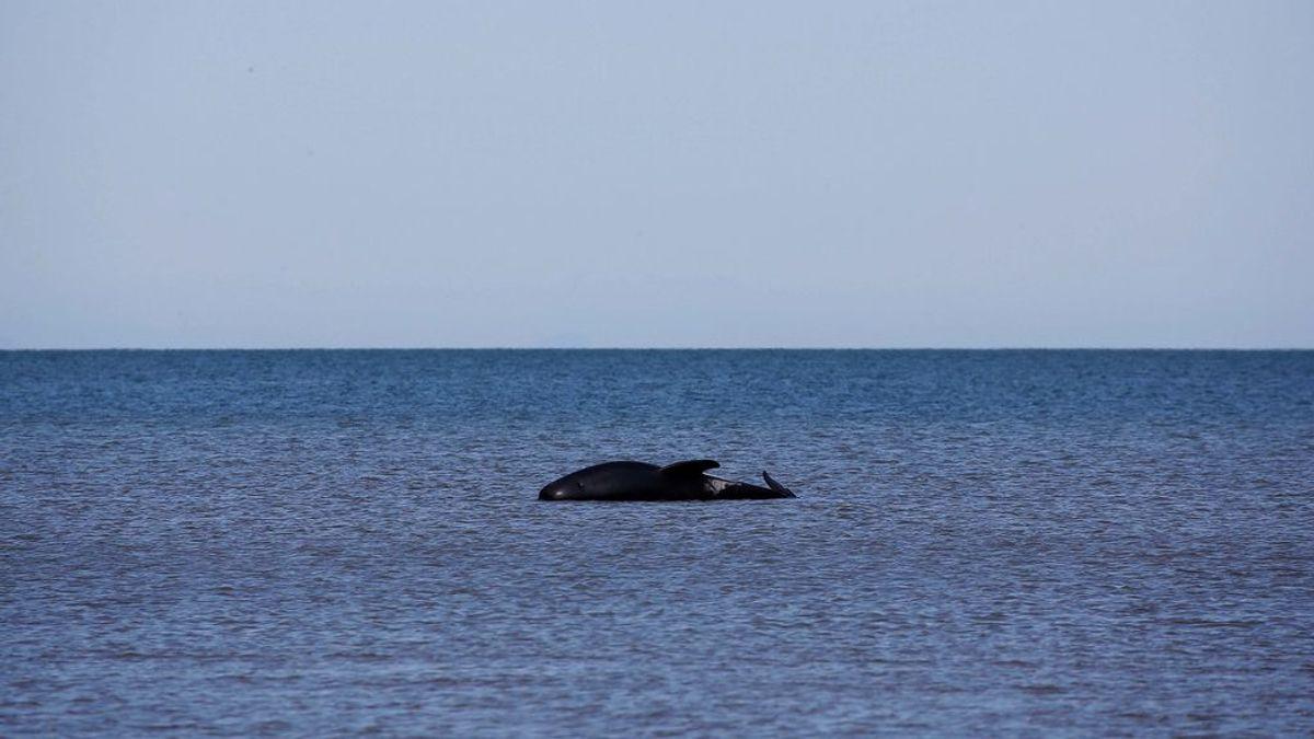 No permiten a Brasil crear un santuario de Ballenas en el Atlántico Sur