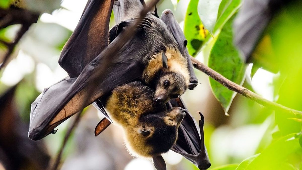 El murciélago que mordió a un joven en Huelva tenía la rabia