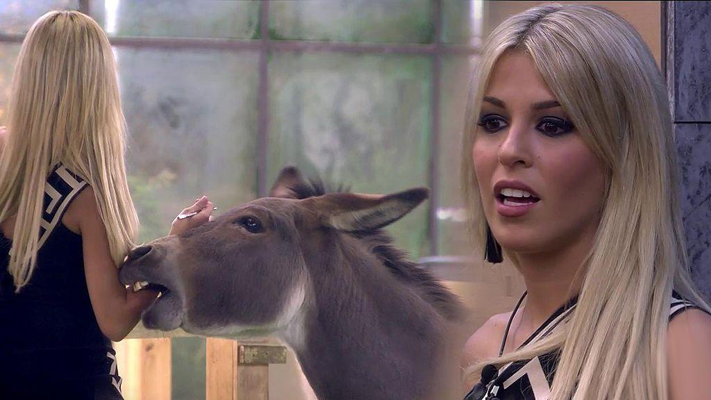 """Oriana se estrena en 'GH VIP 6' con el divertido ataque de un burro adorable: """"¡Me está mordiendo!"""""""