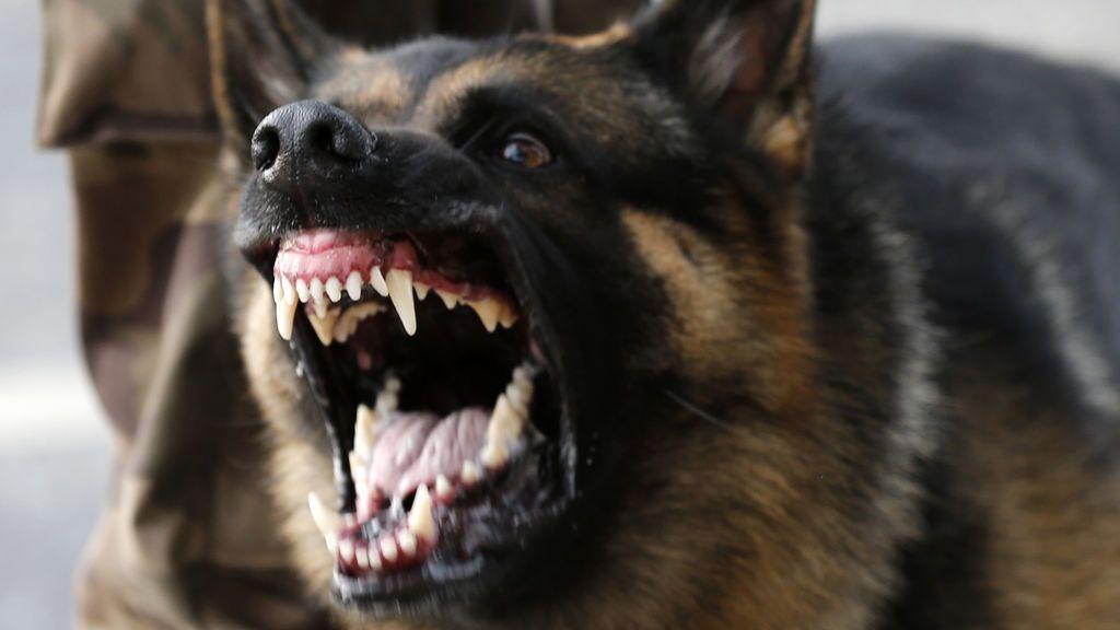 Un perro muerde en el pene a un hombre después de que este lo maltratara