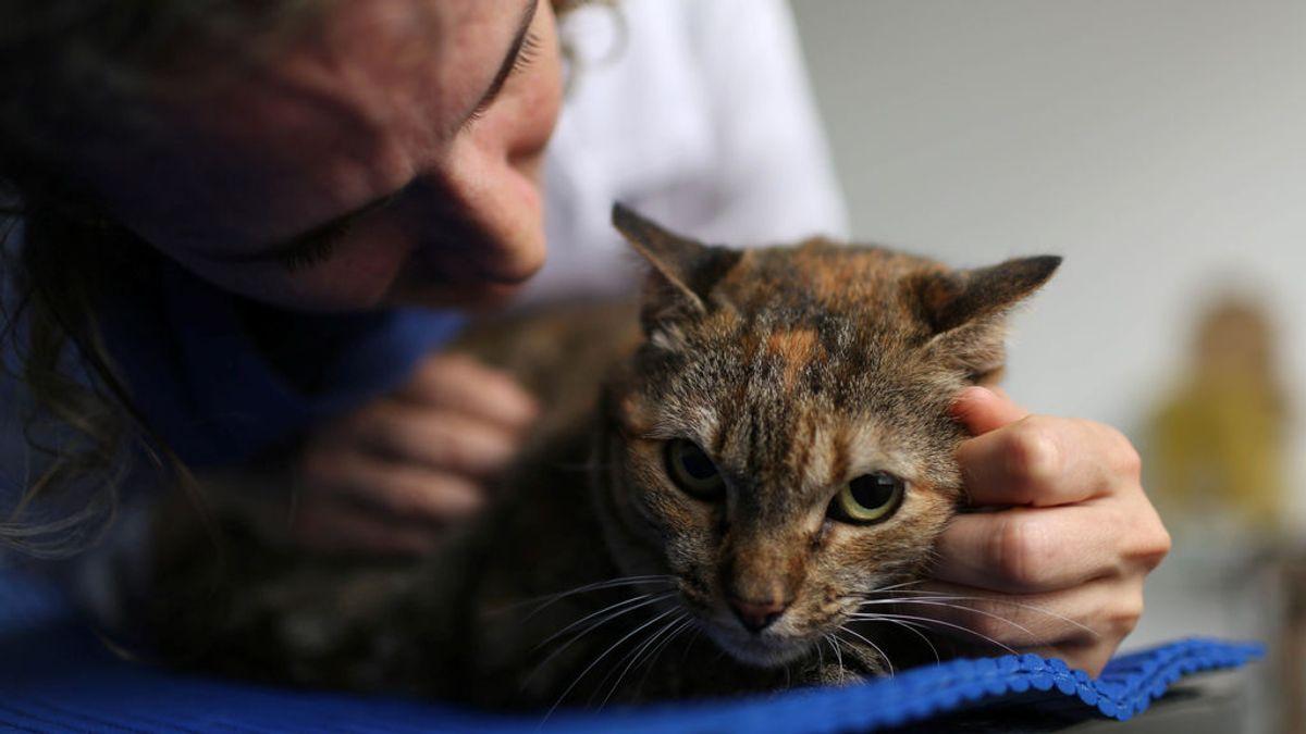 Lo que dicen los veterinarios de la parte más difícil de su trabajo: ver morir a las mascotas sin sus dueños